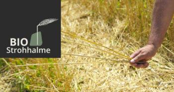 strohhalm-titelbild